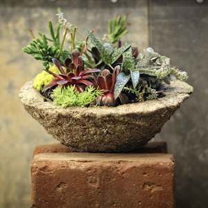 05.16 Succulent Trough Party 10a